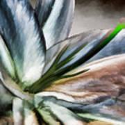 Dirty White Lily 1 Art Print