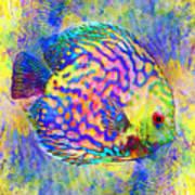 Discus Fish Art Print