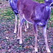 Distrubing Deer Art Print
