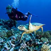 Diver And Green Sea Turtle Chelonia Art Print