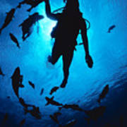 Diver And Reef Fish Art Print