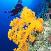 Diving, Australia Art Print