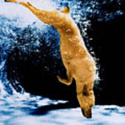 Diving Dog Underwater Art Print