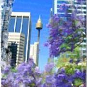 Do-00106 Spring In Sydney Art Print
