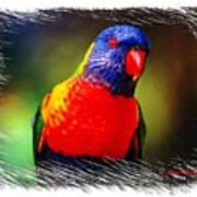 Do-00153 Colourful Lorikeet Art Print