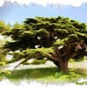 Do-00319 Cedar Tree Art Print