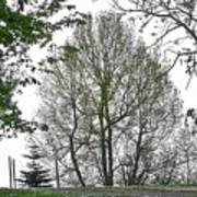 Do You See The Walking Tree Art Print