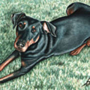 Dobermann Art Print