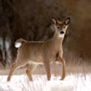 Doe A Deer Art Print