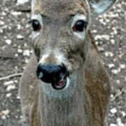 Doe Eyed Deer Talk Art Print
