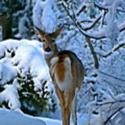 Doe In The Snow In Spokane 2 Art Print