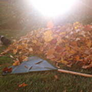 Dog And Autumn Leaves Art Print