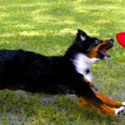 Dog And Red Frisbee Art Print