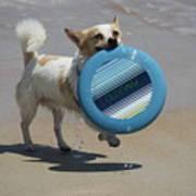Dog Beach Bliss Art Print