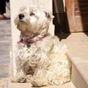 Dog Begging Art Print