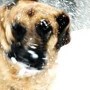 Dog Blizzard - German Shepherd Art Print