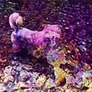 Dog Happy Nature River  Art Print