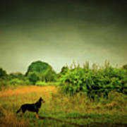 Dog In Chesire England Landscape Art Print