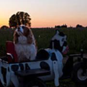 Dog In Cow Wagon  Art Print
