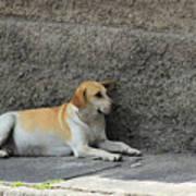 Dog Next To A Wall Art Print