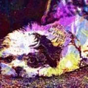 Dog Noddy Lhasa Apso Pet Puppy  Art Print