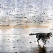 Dog On Beach Art Print