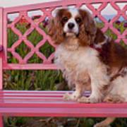 Dog On Pink Bench Art Print