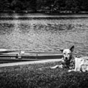 Dog On The Lake #2 Art Print