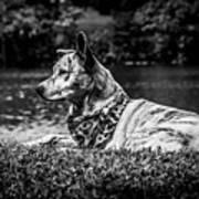 Dog On The Lake Art Print