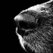 Dog Smeller Art Print