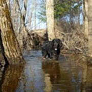 Dog Wading In Swollen River Art Print