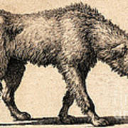 Dog With Rabies, Engraving, 1800 Art Print