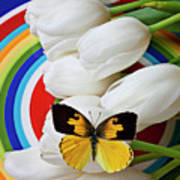 Dogface Butterfly On White Tulips Art Print by Garry Gay