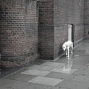 Doggie Strolling 1 Art Print
