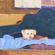 Doggy In The Guitar Case Art Print