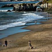 Dogs Beach Santa Cruz California Nature  Art Print