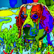 Dogs Can See In Color Art Print