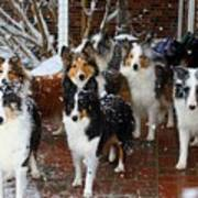 Dogs During Snowmageddon Art Print