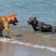 Dogs In Lake Michigan Art Print