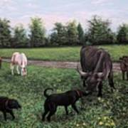 Dogs Meeting Bull Art Print