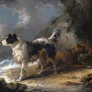 Dogs On The Coast Art Print