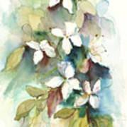 Dogwood Branch Art Print