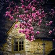 Dogwood By The Window Art Print