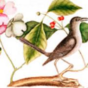 Dogwood  Cornus Florida, And Mocking Bird  Art Print