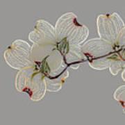 Dogwood Flowers 3 Art Print