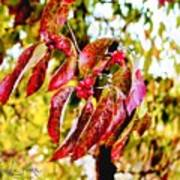Dogwood Leaves Art Print