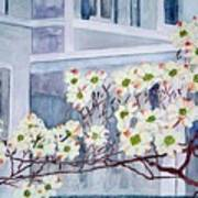 Dogwood Time In Oldtown Art Print