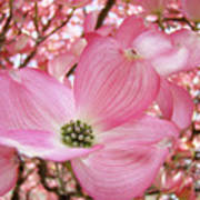 Dogwood Tree 1 Pink Dogwood Flowers Artwork Art Prints Canvas Framed Cards Art Print