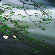 Dogwoods And Merced River Art Print