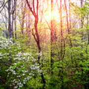 Dogwoods In The Forest Art Print